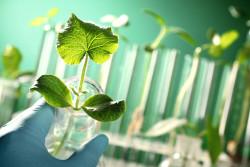 Биотехнология: природоподобие на благо человека. «В мире науки» №10, 2019
