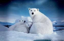 Ученые выделили штаммы микробов, которые могут помочь очистить Арктику от нефтяных отходов