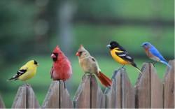 Впервые охарактеризована архитектура генома птиц