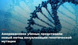 Биологи из Нью-Йоркского университета визуализировали процесс делеции и дупликации на уровне одной клетки на примере клеток дрожжей