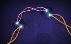 Ошибки метода CRISPR научились предсказывать