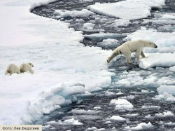Невидимых глазу поставим на службу: от нефти вечные льды избавит новая биотехнология