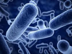 Секвенирование РНК для изучения микробиома кишечника