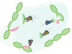 Биологи из США раскрывают сложную сеть генов, которая помогает растениям справляться с повреждением ДНК