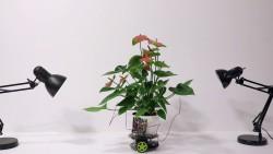 В MIT создали робота Elowan. Им управляют растения!