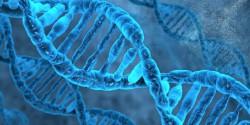 Решена одна из величайших загадок биологии: механизм, который контролирует удвоение молекулы ДНК