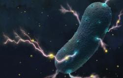 Разработан метод поиска генерирующих электричество бактерий