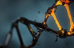 Найден способ повысить точность разрезания ДНК