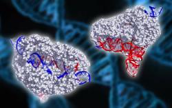 Новый белок для редактирования генома меньше и лучше аналогов