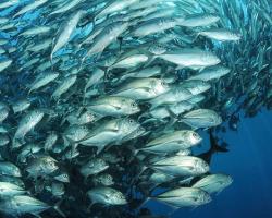 На Петербургском форуме эксперт ФАО обрисовала потенциал роста аквакультуры