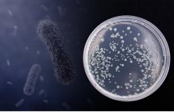 У бактерий нашли новую стратегию выживания