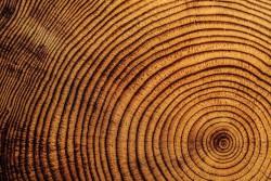 Понимание механизмов утолщения растений может повысить эффективность производства биомассы