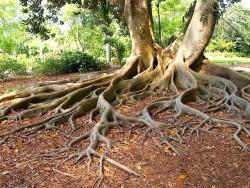 Ученые создали биопрепарат, уничтожающий паразитирующие на корнях деревьев организмы