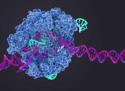 Ученые из МГУ, «Сколтеха» и ИТЭБ РАН встроили термометр в геномный редактор