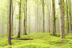 Биологи предложили посадить триллион деревьев для борьбы с глобальными изменениями климата