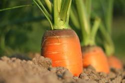 Конференция «Почва как суперорганизм. Агробиотехнологии в создании идеальной почвы»