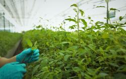 Биологи предложили изменить гены некоторых растений. Это ускорит процесс обработки парниковых газов