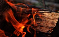 Пуленепробиваемое дерево оказалось огнеупорным