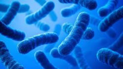 На обшивке МКС обнаружены бактерии, которые могут жить в открытом космосе несколько лет
