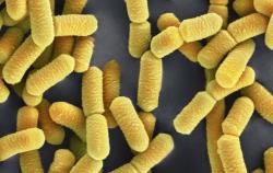 Бактерии могут жить и расти в оксиде азота