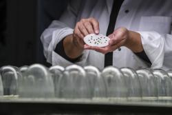 Беларусь принимает меры для защиты и сохранения генетических ресурсов растений