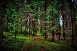 Ученый: генно-модифицированные деревья помогут решить проблему восстановления лесов