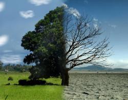 Устойчивость к противомикробным препаратам связана с изменением климата