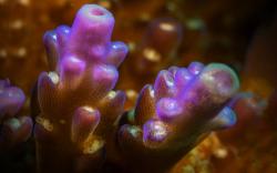 Впервые обнаружен организм, содержащий гены хлорофилла, но не использующий их по назначению