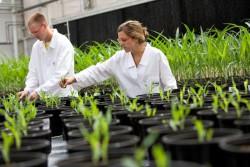 Науку просят нарастить добычу и увеличить урожай. Правительство сформулировало задачи НОЦ