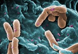Бактерия со спидометром