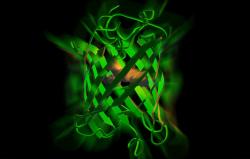 Ученые из МФТИ создали термостабильный и анаэробный флуоресцентный белок