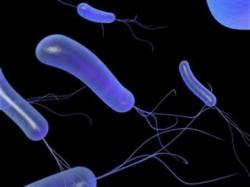 Молекулярные биологи из институтов РАН создали белок-«киллера» для борьбы с синегнойной палочкой
