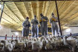 Создан новый многосторонний целевой фонд для борьбы с устойчивостью к противомикробным препаратам