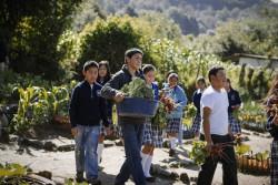 Продовольственные системы будущего должны обеспечивать здоровое и устойчивое питание для всех
