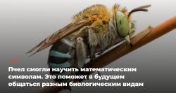 Пчел смогли научить математическим символам. Это поможет в будущем общаться разным биологическим видам