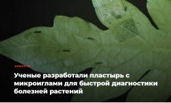 Ученые разработали пластырь с микроиглами для быстрой диагностики болезней растений