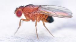 Ученый рассказал о последствиях мутации мух с биоспутника «Фотон-М»