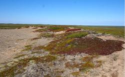 Ученые впервые исследовали бактерии молодых почв тундры