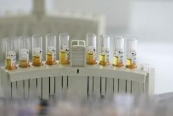 В России изобрели препарат для переработки отходов в топливо и удобрения