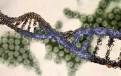 Японские биологи открыли миллион альтернатив для ДНК и рибонуклеиновых кислот