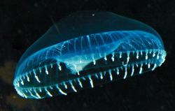 Обнаружен самый яркий флуоресцентный белок