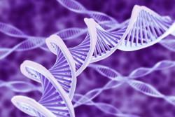 Генетики с помощью CRISPR удалили ВИЧ у мышей