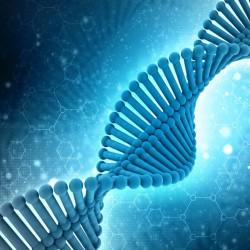 Новосибирские генетики создают гибрид генома и «цифры»