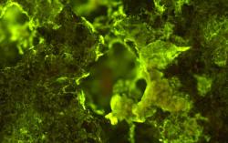 Микробы помогут добывать полезные ископаемые в космосе