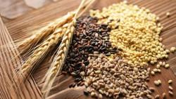 «Иннпромбиотех» крахмалит Курск: В регионе могут наладить переработку пшеницы за 10 млрд рублей