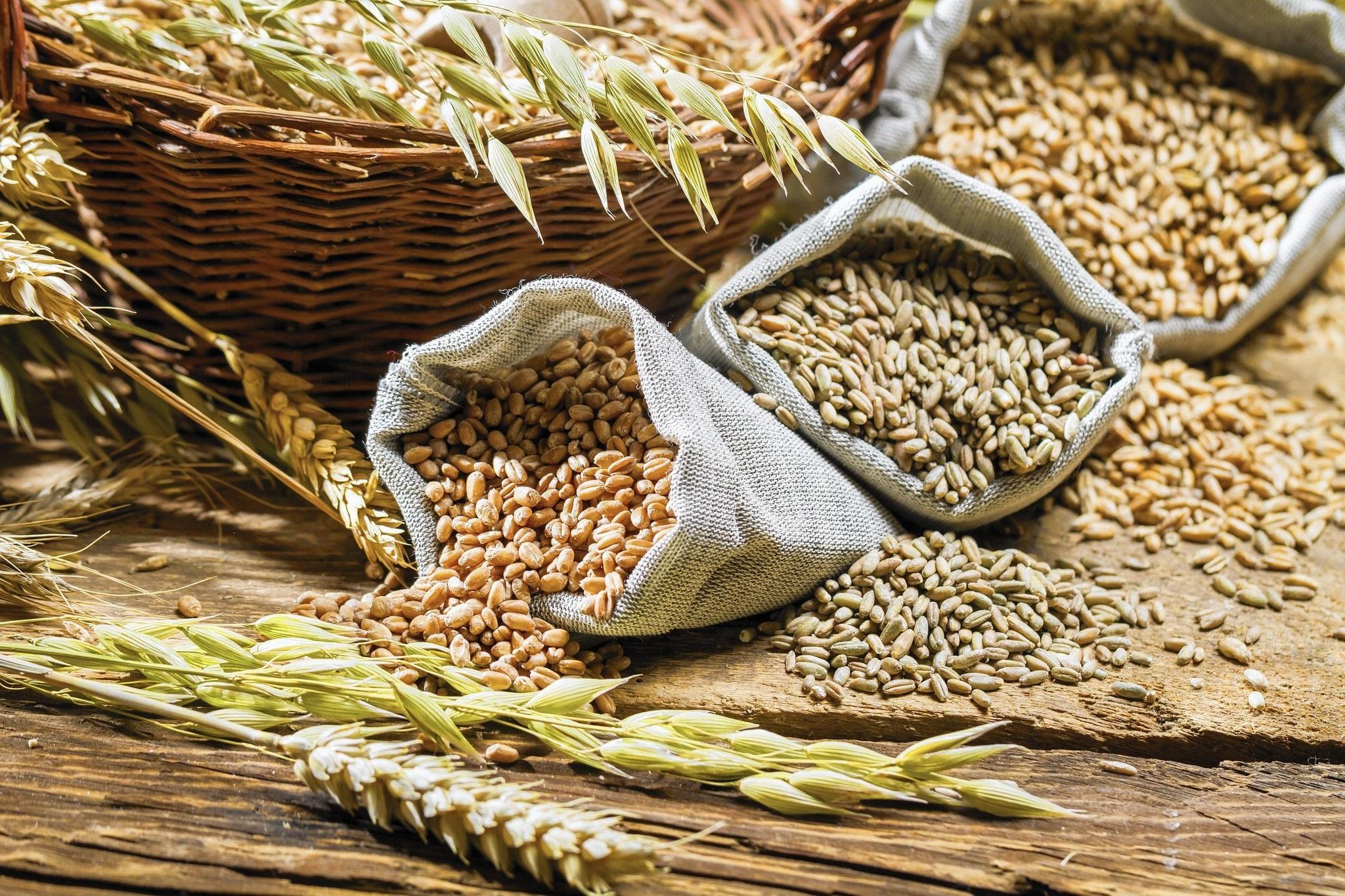 зерно сельское хозяйство переработка