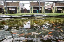 ФАО подчеркивает огромный потенциал генетических улучшений в аквакультуре для повышения продовольственной безопасности