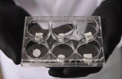 В Ростовском университете разработали биопринтер для создания живых тканей