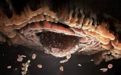 Микробиологи впервые культивировали клетки асгардархей