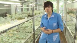 Сочинские ученые вместе с коллегами из Китая изучают геном чая